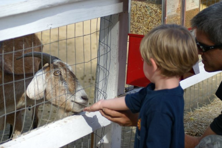 Goat and child at petting zoo