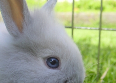 Radio Presenter Who Killed a Baby Rabbit Live on Air Should Face Justice