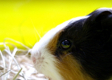 MEPs Question the Validity of Animal Tests, Call for Wider Debate