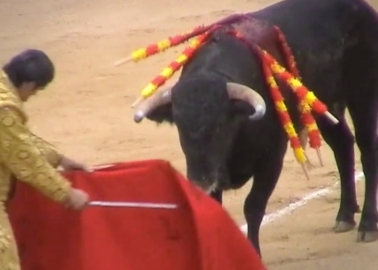 Too Many Tourists Don't Realise That This Happens Right After the 'Running of the Bulls'