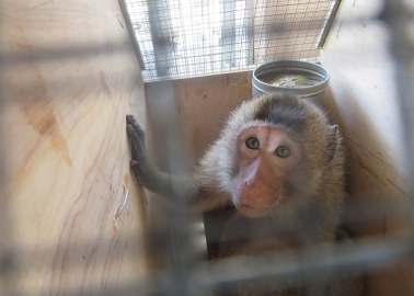 Exposed: How Monkeys Are Neglected and Terrorised at Notorious US Primate Dealer