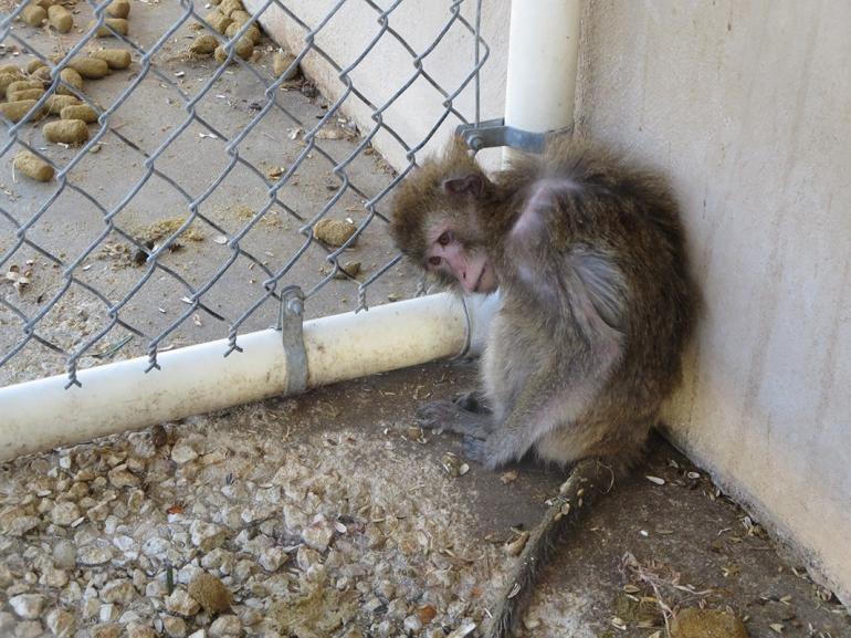 Thin-Monkey-in-Filth1