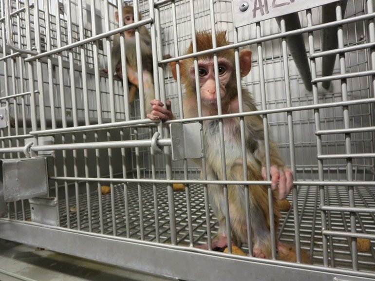 Young-Monkeys-in-a-Barren-Cage2
