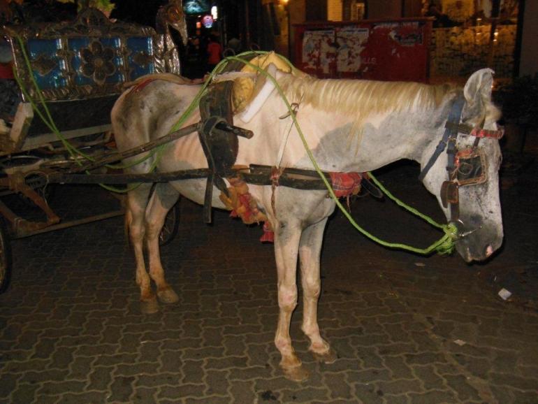 PETA India Horse