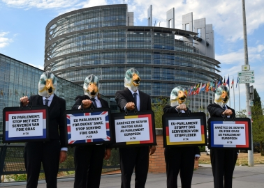 Flock of PETA 'Ducks' Heads to Strasbourg Parliament With an Important Message