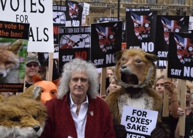 Victory – for Now – as Fox Hunting Vote Is Shelved