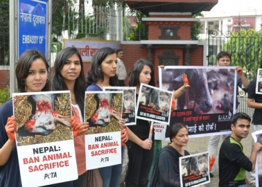 Victory! Animal Sacrifice Banned at Nepal's Gadhimai Festival