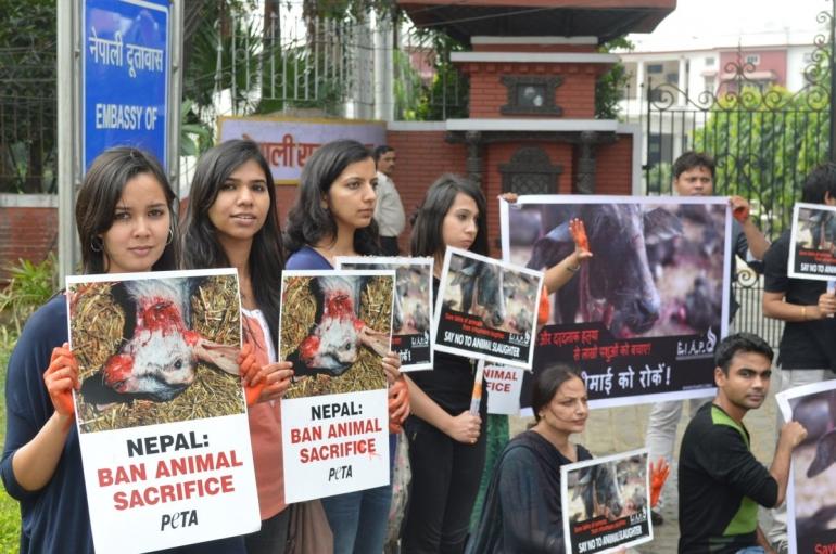 Gadhimai PETA India Demo