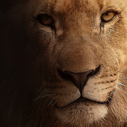 Let Cecil Be the Last – Ask South Africa and Zimbabwe to Ban Canned Hunting