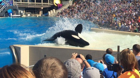 SeaWorld orca and crowd_mini