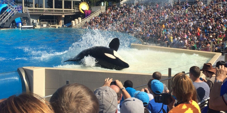 SeaWorld Orca dan crowd_mini