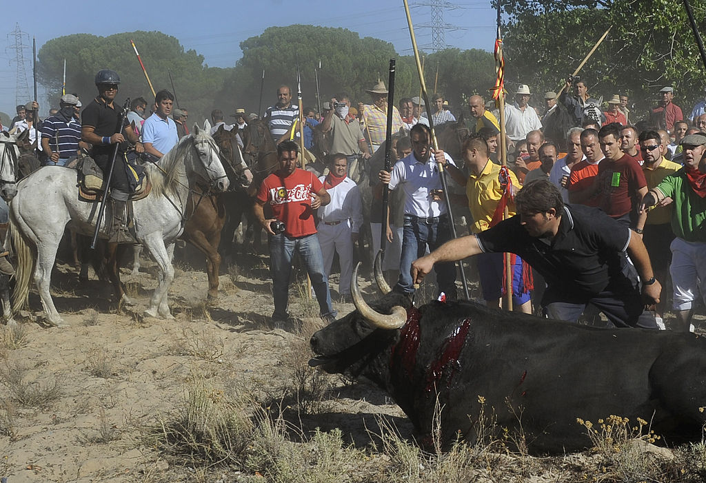 Speak out against Toro de la Vega