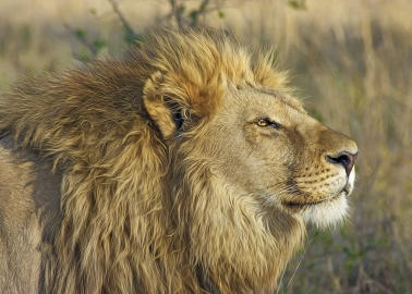 Which African Country Has Banned Trophy Hunting?