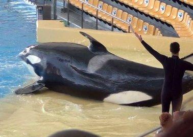 Spanish Court Dismisses Theme Park's €100,000 Defamation Suit Against PETA
