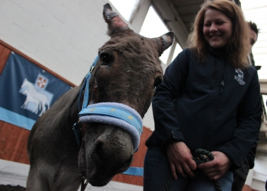 Hero Fire-Fighters Come to Noah the Donkey's Rescue