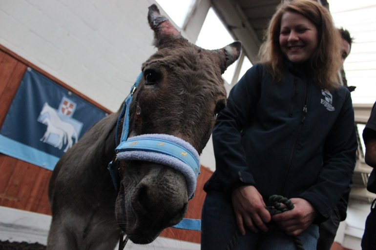 Noah Donkey1