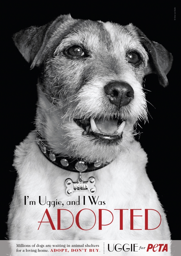Ad-Uggie-I-Was-Adopted-Eng-3001