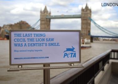 Tiny Billboards Send Powerful Message Around the Globe
