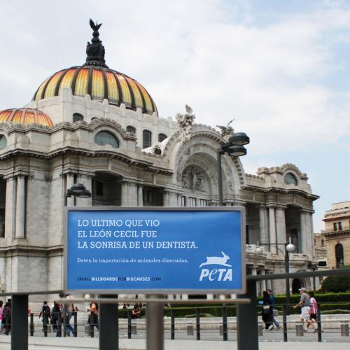 PETA Tiny Billboard - Mexico City