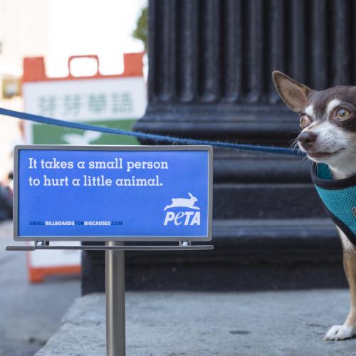 PETA Tiny Billboard - New York 1