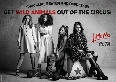 Little Mix's Big Message: Get Wild Animals Out of the Circus