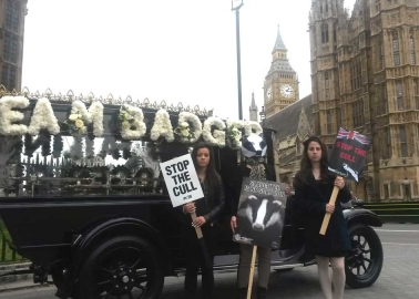 PHOTOS: Team Badger Holds 'Funeral' for Cull Victims