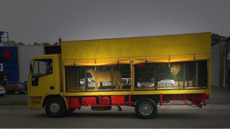 Circus-animals-in-truck