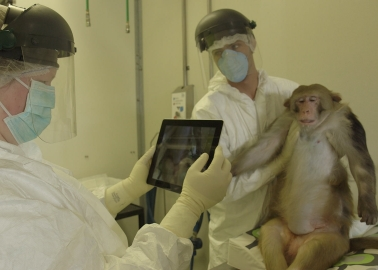 Victory! Europe's Largest Primate Testing Lab Told to Phase Out Cruel Experiments