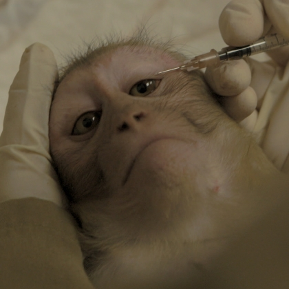 Help! Primates Abused at Europe's Largest Monkey Testing Laboratory