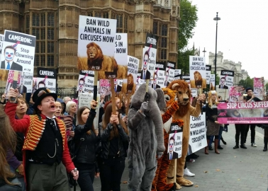 How to Speak Out Against Wild-Animal Circuses in England, Ireland, Scotland, and Wales