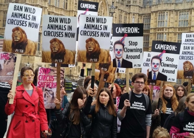 PHOTOS: 'Wild Animals' Roar for Cruel Circuses to End