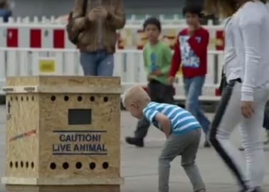 See How Berliners React to Monkey Sounds Coming From This Mysterious 'Air France' Cargo Crate