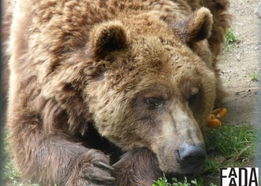 Happy Ending for Two Brown Bears Who Spent Years In a Cage Next to a Car Park