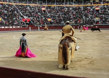 Spain's Bullfighting Schools Must Be Shut Down
