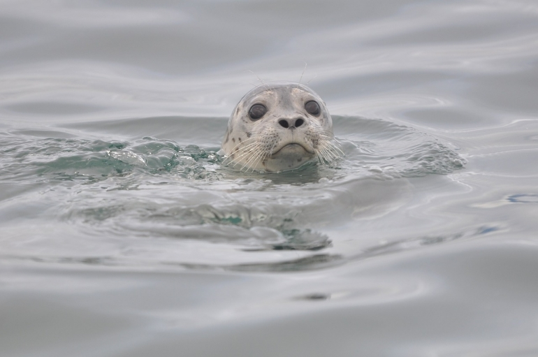 Scotland seal slaughter