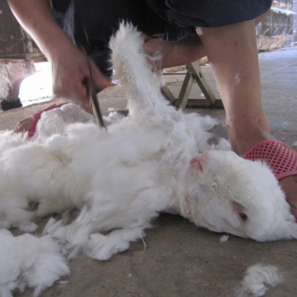 Do These Angora Farms Look 'Humane' to You?