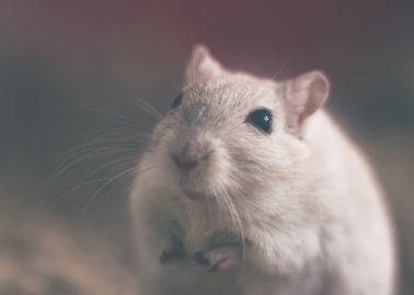 Swedish Nutrition Giant Bans Animal Testing