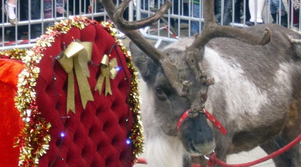 Take Action: Get Cruelty Out of Santa's Grotto