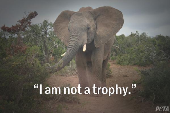 I am not a trophy