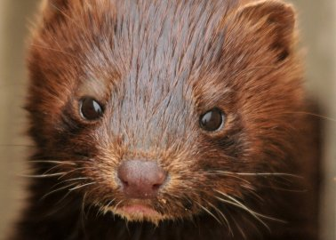 PETA Celebrates Valentino's Farewell to Fur
