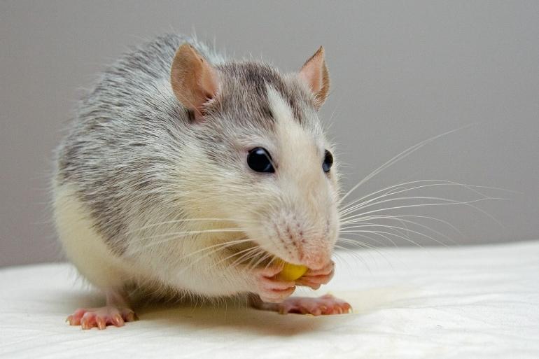 Animal testing victory