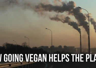 16 Facts That Show How Going Vegan Helps Stop Climate Change