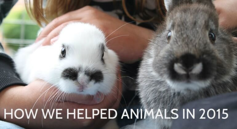 2015 Helping Animals