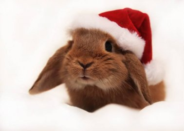 11 Ways to Help Animals This Holiday Season