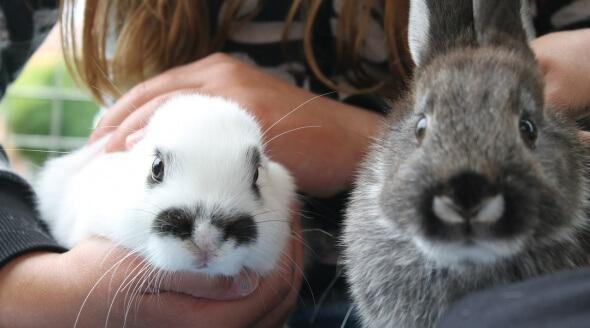 Cute rabbits CC0