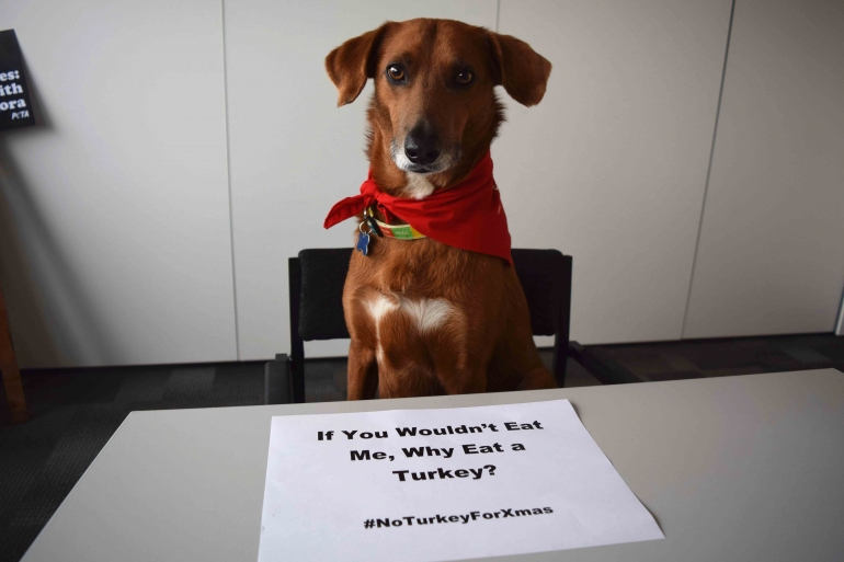 Dog Sign Don't Eat Turkey Christmas