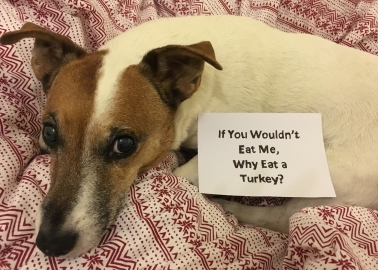 'If You Wouldn't Eat Me, Why Eat a Turkey?'