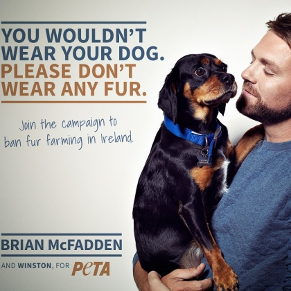 Brian McFadden Stars in New PETA Ad Calling for Ban on Irish Fur Farms