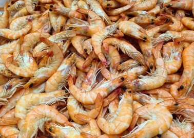 One More Reason Not to Eat Shrimp – Slavery