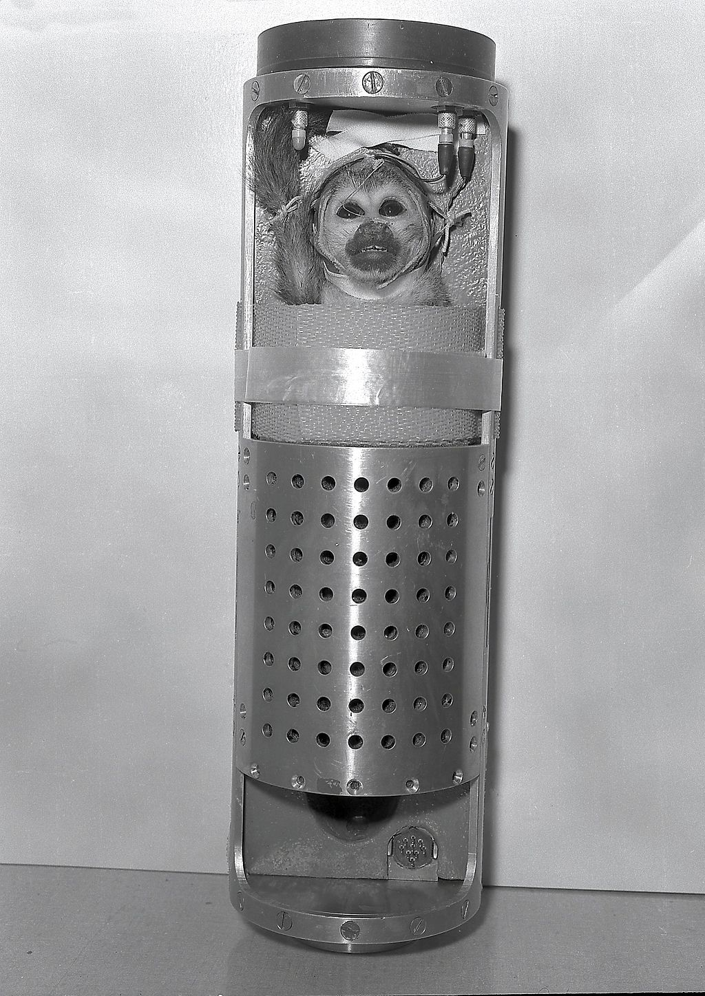 Baker the monkey was sent into space in the 1950s